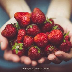 Bargain Fruit (WT462)